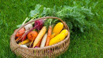 Rautsi talu aedviljad